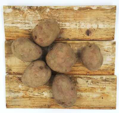 Kartupeļi ''Laura''