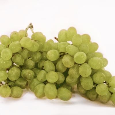 Vīnogas Thompson bez kauliņa